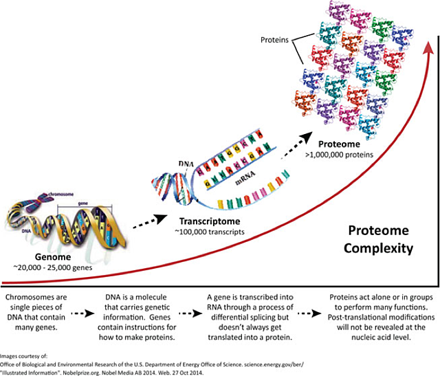 How will proteomics change the face of cancer detection when decoded genes inform the cellular machinery how to sequentially assemble a specific protein there are between 20000 and 25000 protein encoding malvernweather Choice Image