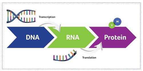 DNA-RNA-Protein-Social_1024.png